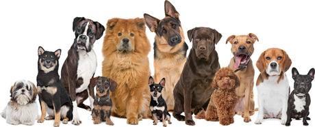 Adopt-a-Rescued-Pet ll