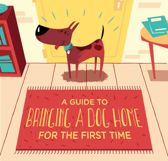 Everything You Should Know Before You Bring a Dog Home for the First Time